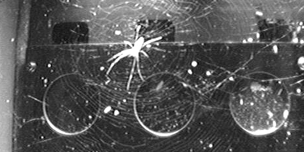 Spinnen im Weltall: Licht als Ersatz für Schwerkraft